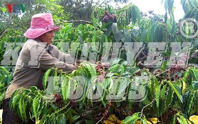 Xuất khẩu cà phê tháng 4 giảm - caphehat.vn