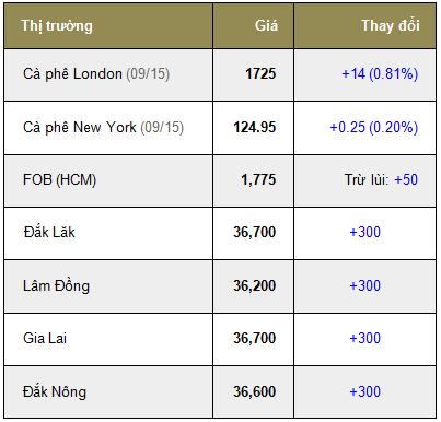 Giá cà phê trong nước ngày 09/07/2015 tăng trở lại 300 ngàn đồng/tấn