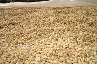 Lâm Đồng: Người dân tích trữ cà phê chờ tăng giá