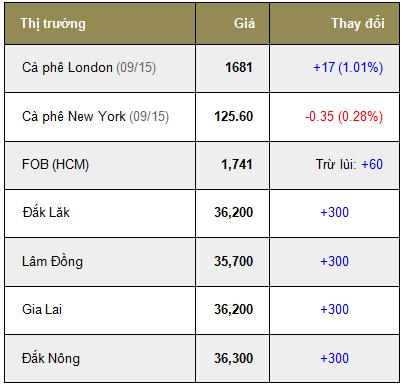 Giá cà phê trong nước ngày 23/07/2015 tăng trở lại 300 ngàn đồng/tấn